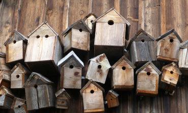 """""""Cibo per gli uccellini"""" lettura e labortatorio per costruire una mangiatoia da giardino"""