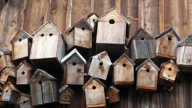 biblioteca casetta cibo inverno laboratorio rodari uccellini corciano-centro ellera-chiugiana san-mariano