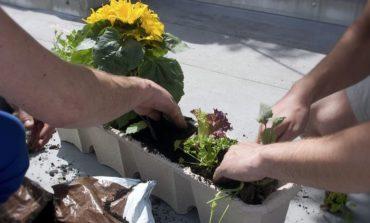 Guerrilla Gardening, salute e altre attività sabato alla Biblioteca Gianni Rodari