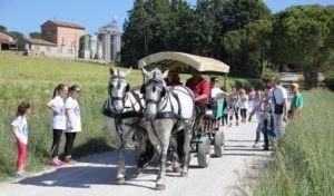 cantinegoretti cavalli l'abbraccio passeggiata perugia vino eventiecultura