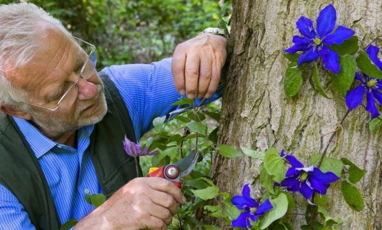 carlo pagani giardinaggio giardino natura orti fioriti pollice verde corciano-centro