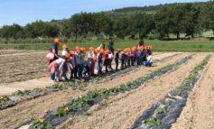 Le scuole a lezione di orticultura: le visite agli Orti Sociali del Comune