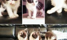 Gattini abbandonati rischiano la vita: salvati da morte certa ora cercano casa. Aiutiamoli!