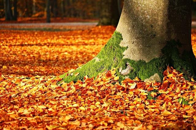 alberi monumentali m5s natura politica