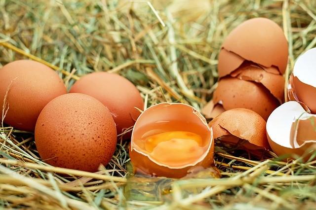 """Uova contaminate: maxi sequestro in un allevamento umbro. Barberini: """"Bassa tossicità, e la situazione è sotto controllo"""""""