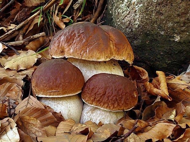 autunno bosco corso micologico funghi iscrizioni lezioni proloco san-mariano