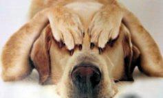 Castrazione del cane maschio, quando e perchè farla