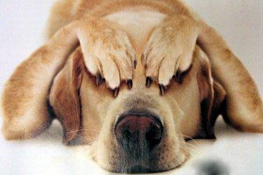 cane castrazione consigli veterinario 4zampe cronaca