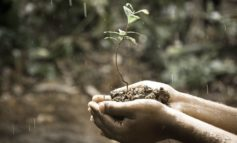 """A Corciano sottratto al verde il 14,8% del suolo, M5S: """"Istituire la Festa dell'albero"""""""