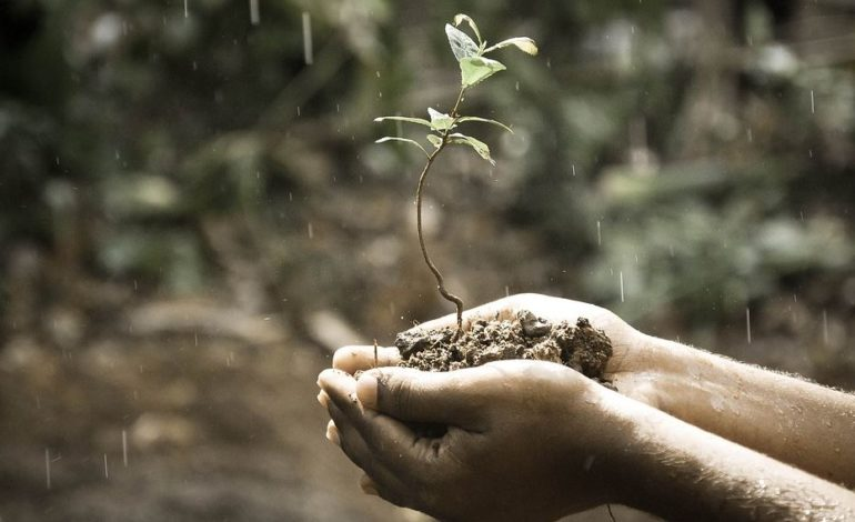 albero m5s natura suolo verde politica