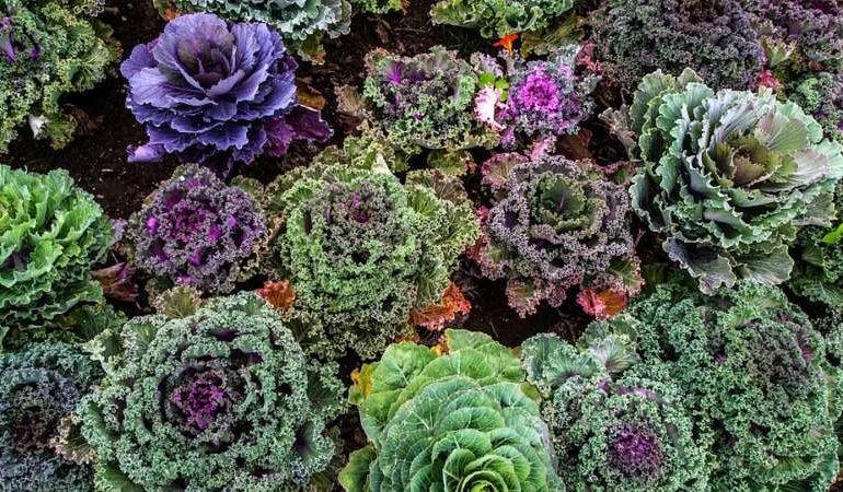 fiori giardini orti fioriti orto primavera corciano-centro eventiecultura