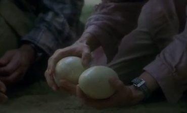 Trovate uova calcificate di dinusauro in un terreno a Chiugiana: si parla già di estrazione del DNA