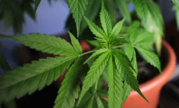 Nove vasi di cannabis in un garage a Ellera, denunciati due perugini