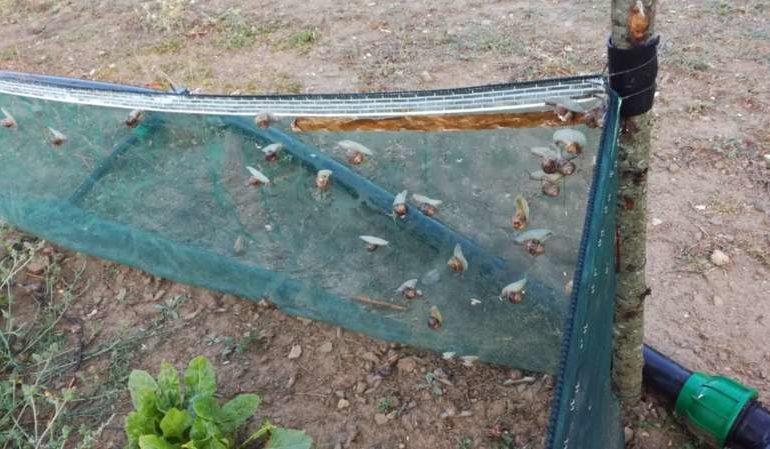 chiocciole elicicoltura escargots lumache economia taverne