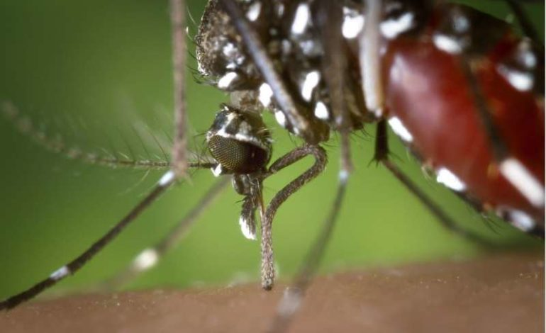 arbovirosi controlli infestazione izsum zanzara tigre cronaca