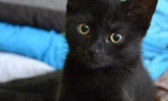 Gatti neri ad Halloween: cosa rischiano e come difenderli