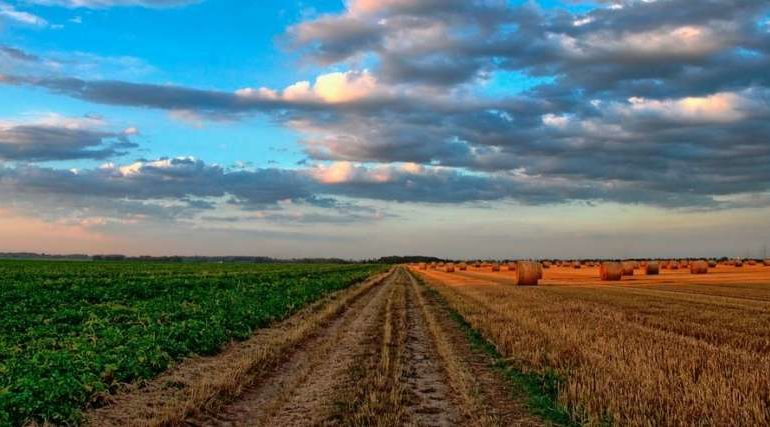 agricoltura agriturismo gal impresa sviluppo rurale economia