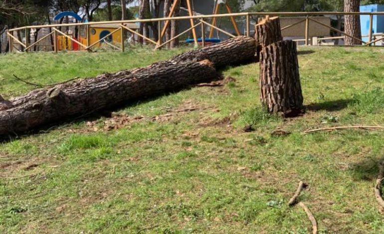 alberi abbattuti m5s replica ripepi politica