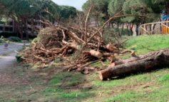 """Alberi abbattuti in via Parco """"uno scempio"""", il Movimento 5 Stelle di Corciano vuole vederci chiaro"""