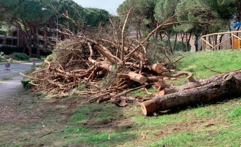 abbattimento alberi m5s mario ripepi parco delle fate politica san-mariano