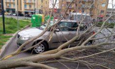 Pianta cade su una vettura parcheggiata a Ellera