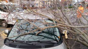 alberocaduto auto meteo vento cronaca ellera-chiugiana