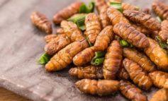"""A Corciano apre """"Bugs Gourmet"""" il primo ristorante di insetti d'Italia"""