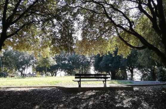 ambiente area boscata colle della trinità parco piano regolatore cronaca ellera-chiugiana