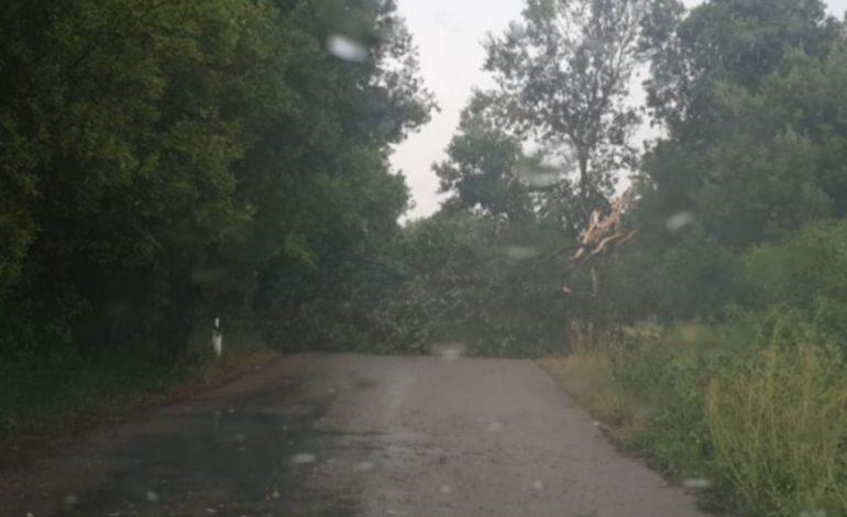Maltempo: albero caduto alla Trinità e altri interventi dei Vigili del Fuoco