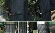 I ladri scassinano il cancello e rubano dal magazzino dell'Arte del Gelato