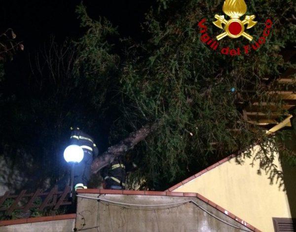 alberocaduto Corciano maltempo vigili del fuoco cronaca taverne
