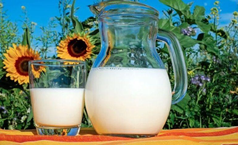 alimentazione cheese fao formaggio gelato ice cream latte milk world milk day glocal