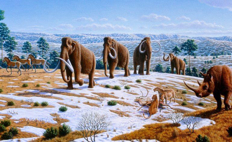 """Al via il progetto """"A spasso per Corciano un milione di anni fa"""""""