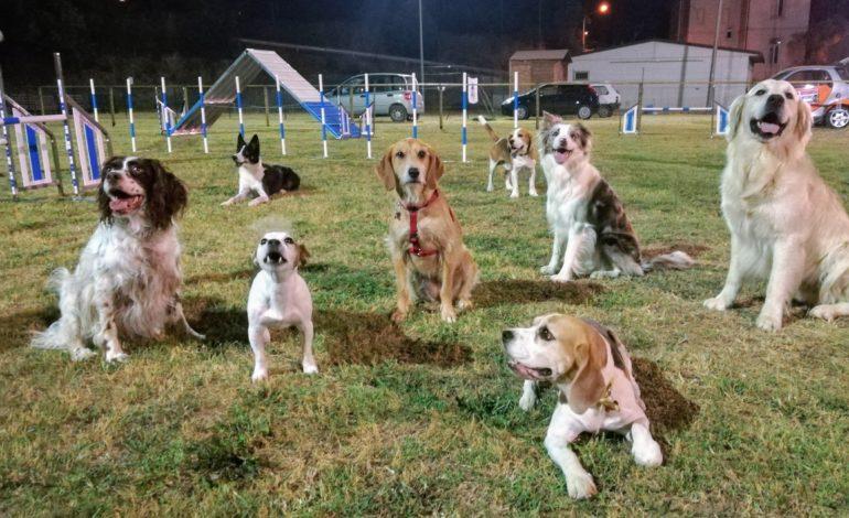 4zampe agility dog cani cinofili giuseppina cenci randagility 4zampe castelvieto