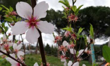 """Nel Parco delle Fate nasce l'Area Primavera, donato il mandorlo del progetto """"Alberi per la vita"""""""