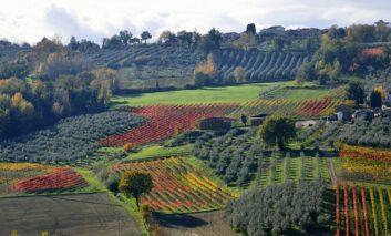 """Vino e maltempo, Fedagripesca-Confcooperative: """"In Umbria danni fino all'80% della produzione"""""""