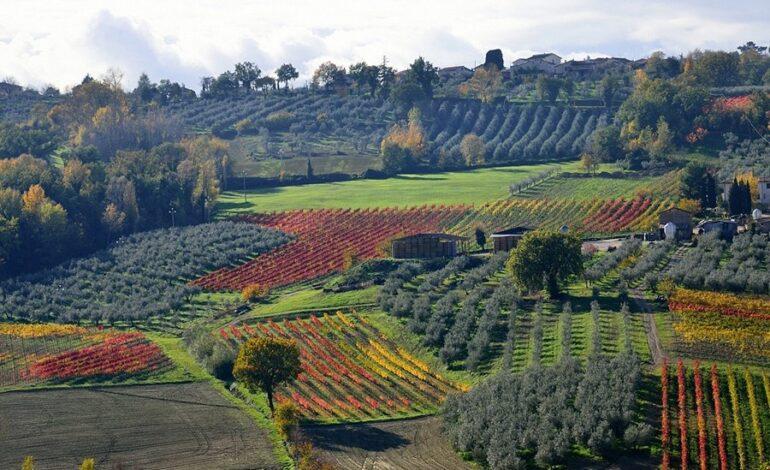 danni economia maltempo produzione vino viti economia